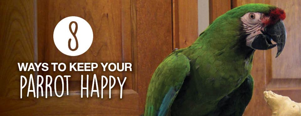 Keep Parrot Happy