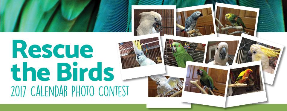 Calendar Photography Contest : Rescue the birds