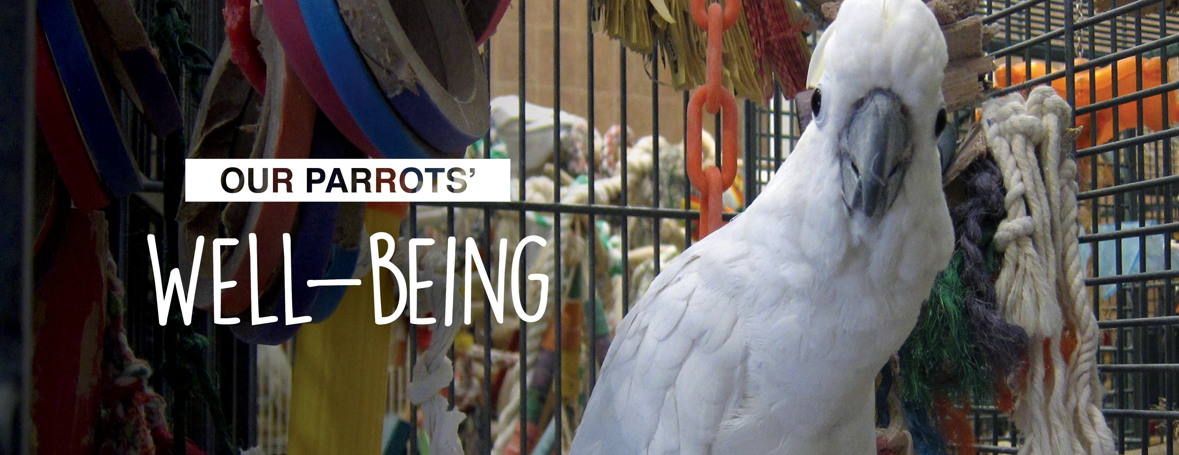 Parrots' Well-Being