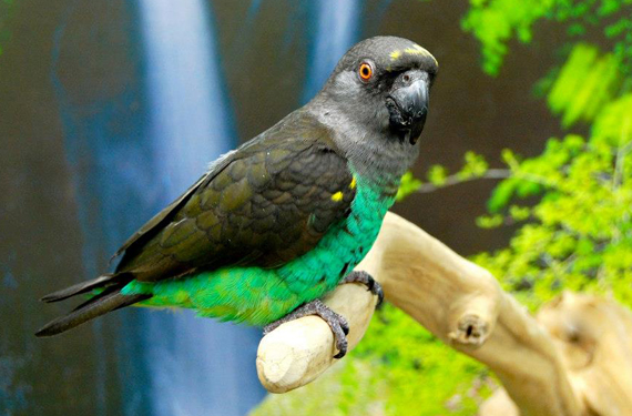 parrot adoption