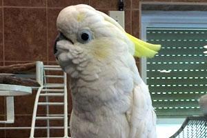 Sambird