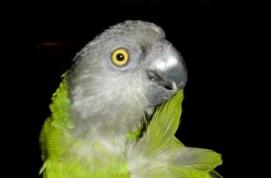 Petrie